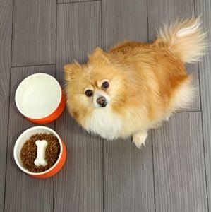 Happy Pet Project Medium Water & Food Bowls